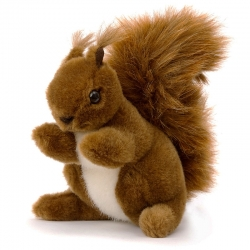 Kosen écureuil