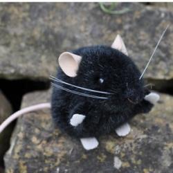 Kosen souris noire