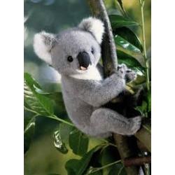 Kosen koala 23 cm