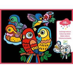 Coloriage velours - Bébés oiseaux