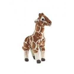 Girafe debout