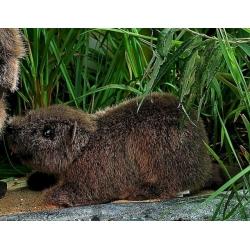 Kosen castor 26cm