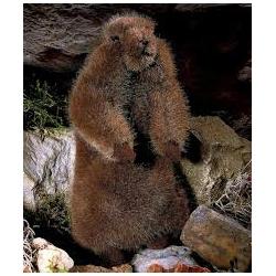 Kosen Bébé marmotte