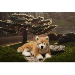 Kosen chien Shiba