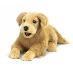 Marionnette golden retriever